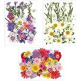 Gitua 117 Stück Echte Gepresste Blumen, Natürlich Getrocknete Blumen für DIY Handwerk, Nail Design, Kunstharz, Schmuckanhänger, Scrapbooking Dekoration
