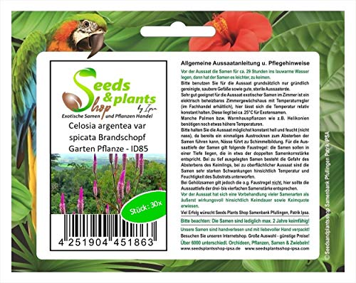 Stk - 30x Celosia argentea var spicata Brandschopf Garten Pflanze - ID85 - Seeds Plants Shop Samenbank Pfullingen Patrik Ipsa