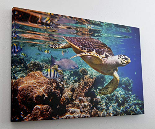 Schildkröte Fische Meer Wasser Leinwand Bild Wandbild Kunstdruck L0141 Größe 100 cm x 70 cm