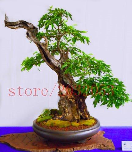 20 rare japonais bonsaï arbre de cerise mini-sakura bonsaï pour la décoration maison