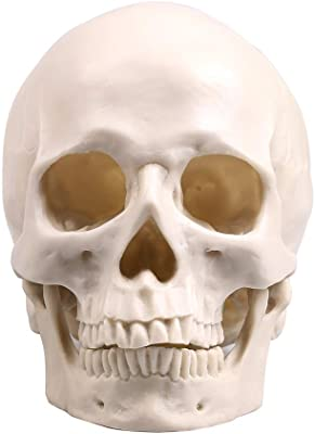 Human Bronze Resin Skull Model Medical Halloween Realistic 1:1 Statue De CE