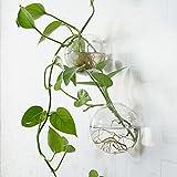 Pflanzengefäße zur Wandmontage, rund, Glas, 6 Stück
