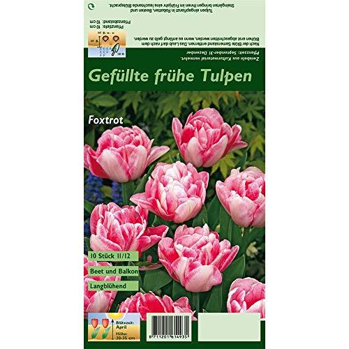 Florado 10x Gefüllte Tulpe Blumenzwiebeln 'Foxtrot', Tulpen Zwiebelblumen, Garten, Blumen Schnittblumen, Bienen Insekten, Größe 11/12