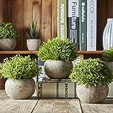 Jobary Set mit 3 künstlichen grünen Gras Pflanzen in grauen Töpfen, kleine dekorative Faux Plastik Pflanzen, ideal für Heim Büro Bad Küche und Outdoor Dekoration - 5