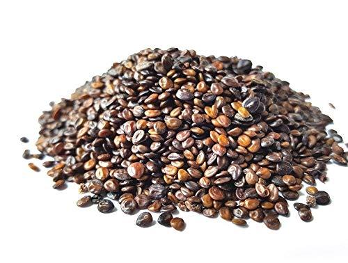 Semi organici: 5 grammi / +/- 750 Seeds: Fresh 2016 tenuiflora/Jurema Tepezcohuite SEMI di Farmerly