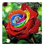 Exotic Plants Rosa Colores del Arco Iris - 10 Semillas