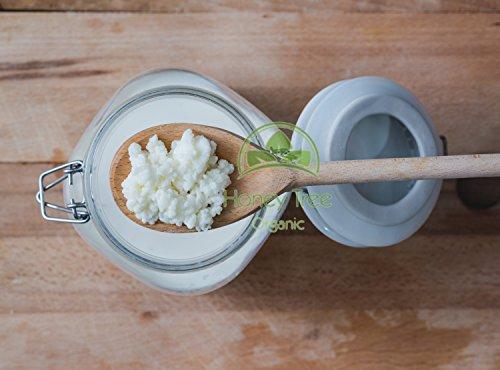 Starter, granuli di latte Kefir, organico, fungo tibetano, probiotici vivi
