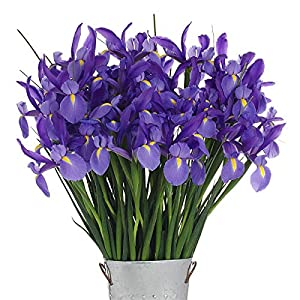 Stargazer Barn Shine Bright Blue Bouquet With Vase - 40 stems of Telstar Iris from Stargazer Barnst1fa -- Dropship