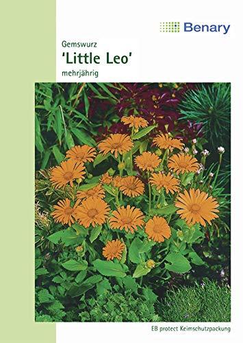 Gemswurz, Doronicum orientale, Little Leo, ca. 25 Samen