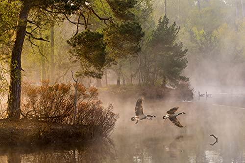 Papel pintado fotográfico de vellón de 250 x 186 cm (6199A), paisaje natural, árboles, niebla y bosque otoñal, incluye cola para decoración de pared, diseño moderno, póster XXL