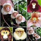 Semillas de árbol de frutas y verduras, 1 bolsa de semilla de flores raras y novedosas formas versátiles, vistosas para el hogar, 200 semillas de orquídea de cara de mono