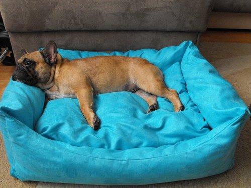 Hobbydog Hundebett+Hundekissen Hundesofa Hundekorb Tierbett Verschiedene Größen und Farben (Größe 5-100cm x 70cm x 25cm, türkis)