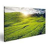 Bild auf Leinwand Teeplantage im Cameron Hochland, Malaysia