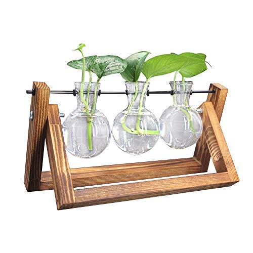 DEDC Deko Holz Halter mit Hydroponik Glasvase Hängevase Blumenvase Tischvase Dekovase (3 Vasen)
