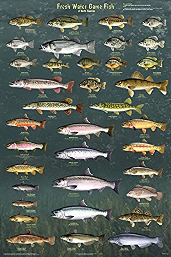 Fresh Water Game Fish of North America Laminated Educational Reference Chart Print Poster 24x36