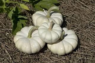 Pumpkin Seed: Gooligan Pumpkin Seeds Fresh Seed
