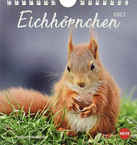 Eichhörnchen Postkartenkalender 2021 - Kalender mit perforierten Postkarten - zum Aufstellen und Aufhängen - mit Monatskalendarium - Format 16 x 17 cm