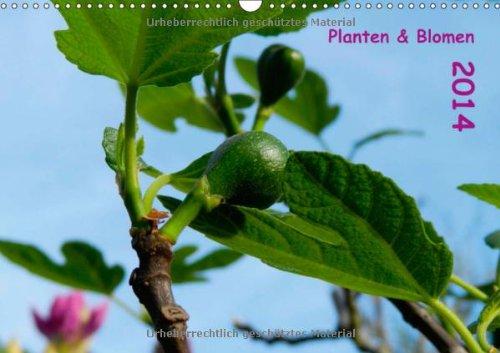 Planten & Blomen 2014 (Wandkalender 2014 DIN A3 quer): Gartenmotive begleiten durch das Kalenderjahr! (Monatskalender, 14 Seiten)