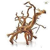 Stoffels Racine Araignée Bois d'Ornement Décoration pour Aquariophilie +/- 75 cm Taille XL
