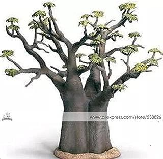 Best baobab bonsai trees Reviews