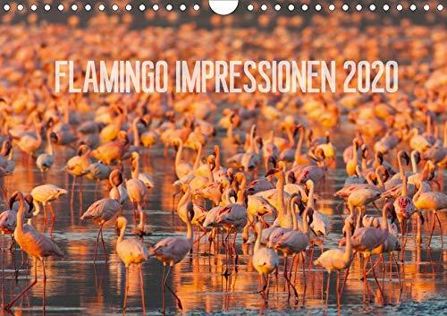 Flamingo Impressionen 2020 (Wandkalender 2020 DIN A4 quer): Grazile Vögle in rosarot (Monatskalender, 14 Seiten ) (CALVENDO Tiere)