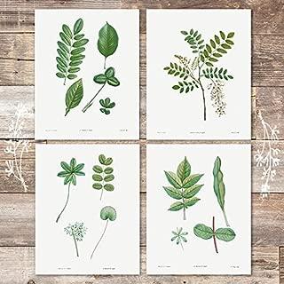 Vintage Green Leaves Wall Art Prints (Set of 4) - Unframed - 8x10s | Botanical Prints