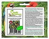 Stk - 5x Garbanzo Chile Semillas Cocina Jardín PW126 - Seeds Plants Shop Samenbank Pfullingen Patrik Ipsa