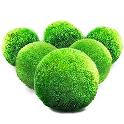 LUFFY Giant Marimo Moss Balls, Aesthetically Beautiful, Create Real Ecosystem, Low-Maintenance, No Special Food Requirements, Suit All Aquarium Sizes, Shrimps and Snails Love Them, 6 Pack