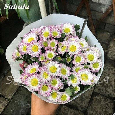 120 pcs graines graines de fleurs Daisy strawberry marguerite, fleurs de saison graines chrysanthème, Bonasi beau balcon fleuri coloré 3