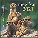 meerkat: 2021 Wall & Office Calendar, 12 Month Calendar