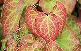 5x Elfenblume