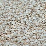 terralith marbre de pierre Tapis 2–4mm