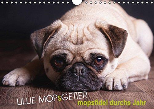 Lillie Mopsgetier - mopsfidel durchs Jahr (Wandkalender 2019 DIN A4 quer): Lillie das Mopsmädchen begleitet Sie im farbenfrohen, abwechslungreichen ... (Monatskalender, 14 Seiten ) (CALVENDO Tiere)