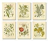 Ink Inc. Psychoaktive Pflanzen, botanische Zeichnungen,