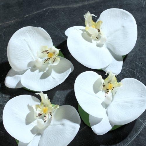 Orchideen Blüte schwimmend creme 11 cm 4 Stück in der Box