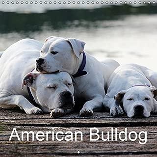 Best american bulldog calendar Reviews