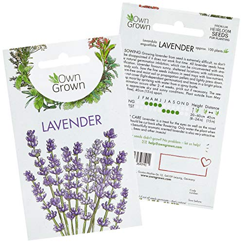 Lavender Plant Seeds: Premium Perennial Lavender Seeds for ca 100 Lavender Plants Outdoor and Indoor – Garden Ready Hardy Plant Seeds – Lavender Seeds for Planting – Perennial Plants Seeds by OwnGrown