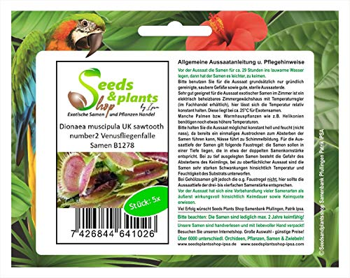 Stk - 5x Dionaea muscipula UK sawtooth number2 Venusfliegenfalle Samen Neu B1278 - Seeds Plants Shop Samenbank Pfullingen Patrik Ipsa