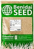 西洋芝草の種 ペレニアルライグラス 2kg(1kg×2袋)紅大貿易 Perennial Ryegrass (not for lawn)