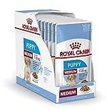 ROYAL CANIN Comida húmeda Puppy Medium Trozos de Carne en Salsa para Cachorros de Razas Medianas - Caja 10 x 140 gr (Bolsitas)