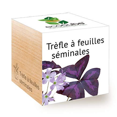 Feel Green Ecocube Trèfle À Feuilles Séminales (Love Plant), Idée Cadeau (100% Ecologique), Grow-Your-Own/Kit Prêt-à-Pousser, Plantes Dans Des Cubes En Bois 7.5cm, Produit En Autriche