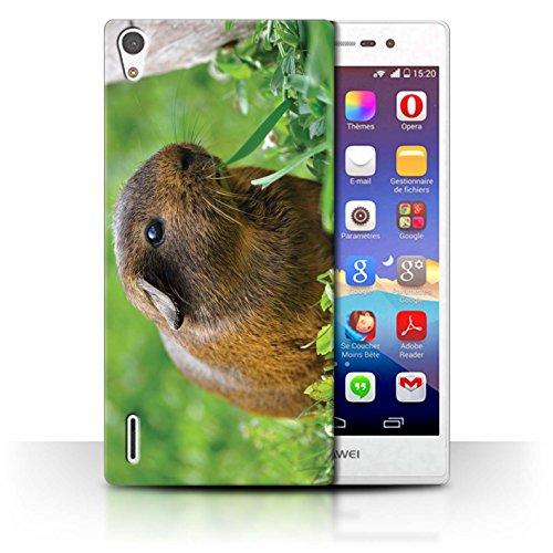 eSwish Carcasa/Funda Dura para el Huawei Ascend P7 LTE/Serie: Lindos Animales de Compañía - Conejillo de Indias