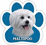 Maltipoo Car Magnet With Unique Paw Shaped Design Measures 5.2 by 5.2 Inches