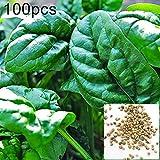 Verlike 100Pz Semi di Spinaci Facile da Coltivare Campo Agricolo Nutriente Pianta da Orto, Semi da Piantare, Semi di Piante da Fiore Facili da Coltivare Semi di Spinaci
