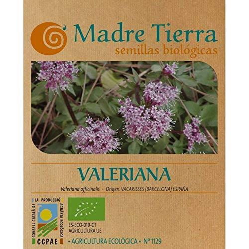 Madre Tierra - Semillas de Valeriana - (Valeriana Officinalis) Origen Vacarisses (Barcelona) Peso Aproximado - 0.10 Gramos