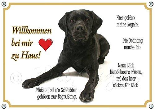 Hundeschild Labrador Retriever - Willkommen - Metallschild in TOP Qualität, DIN A5