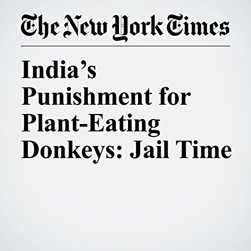 India's Punishment for Plant-Eating Donkeys: Jail Time copertina