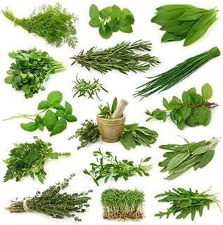 Semillas de Mix Verduras Perennes 300 Semillas de Plantas Aromáticas para Ensaladas