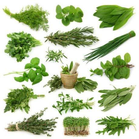 Semillas de Mix Verduras Perennes 300 Semillas de Plantas Aromáticas