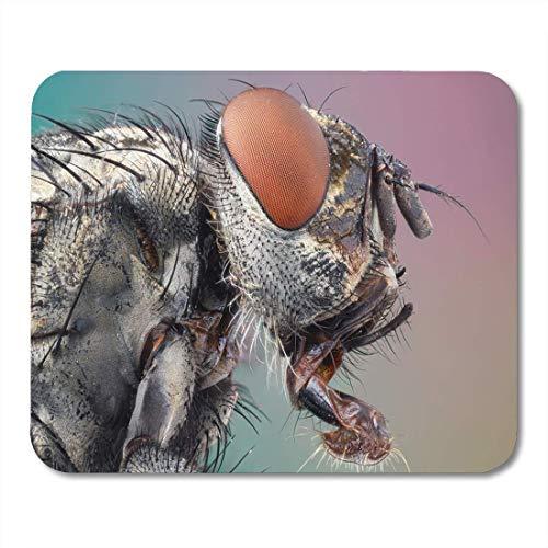 Not Applicable Alfombrillas de ratón Cerrar Detalle Alto Mosca Retrato Microscopio tomado Objetivo Cara Alfombrilla de ratón para portátiles, Alfombrillas de Escritorio Material de Oficina